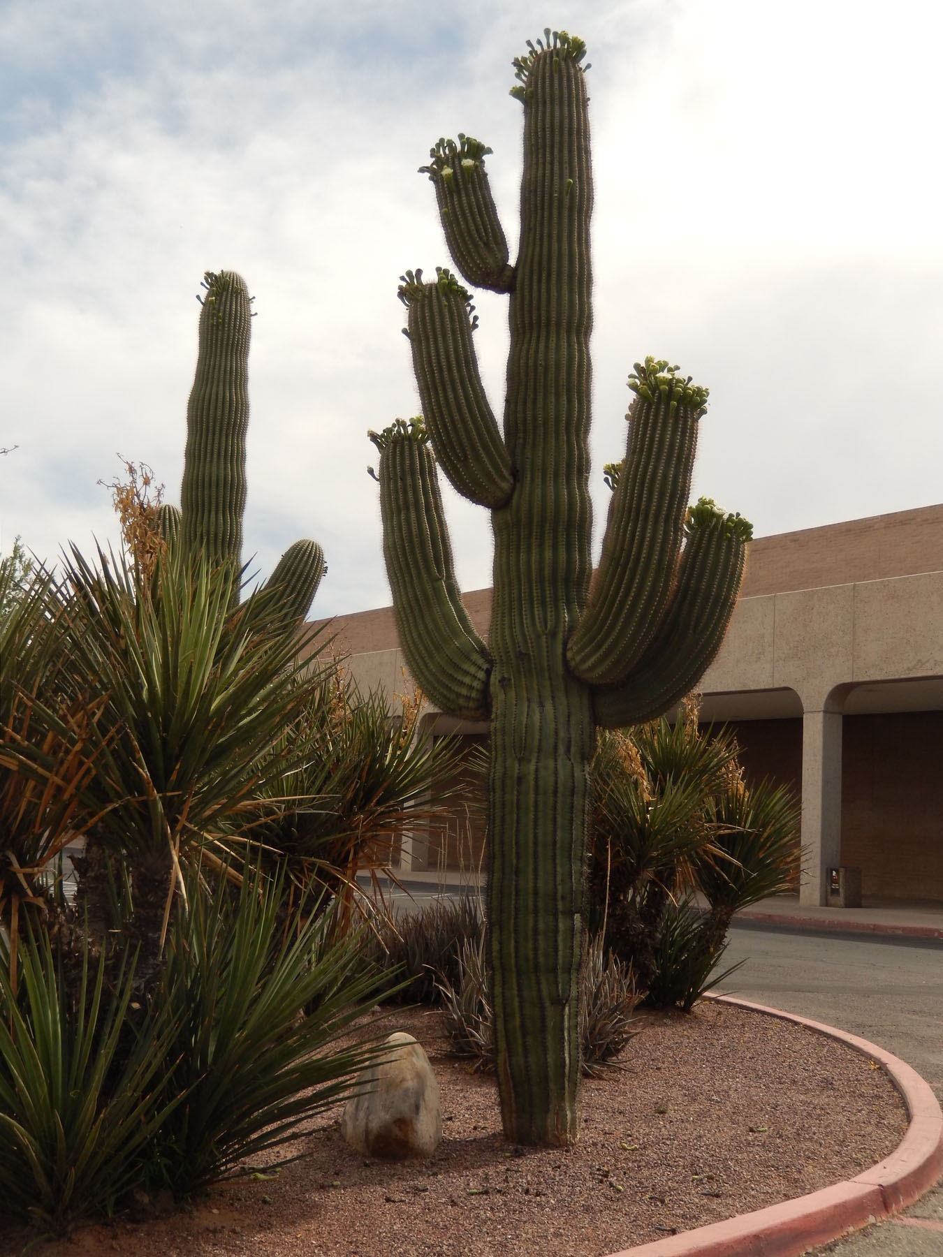 Don't Miss Tucson, Even in Summer