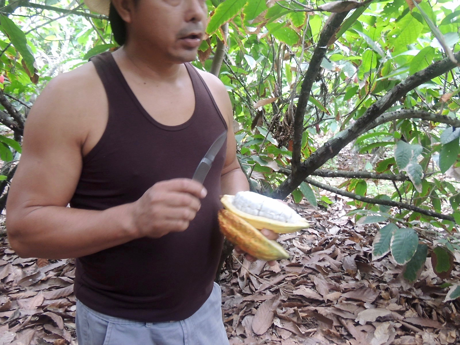 Angel splits open the pod to reveal the white membrane covered cocoa seeds.