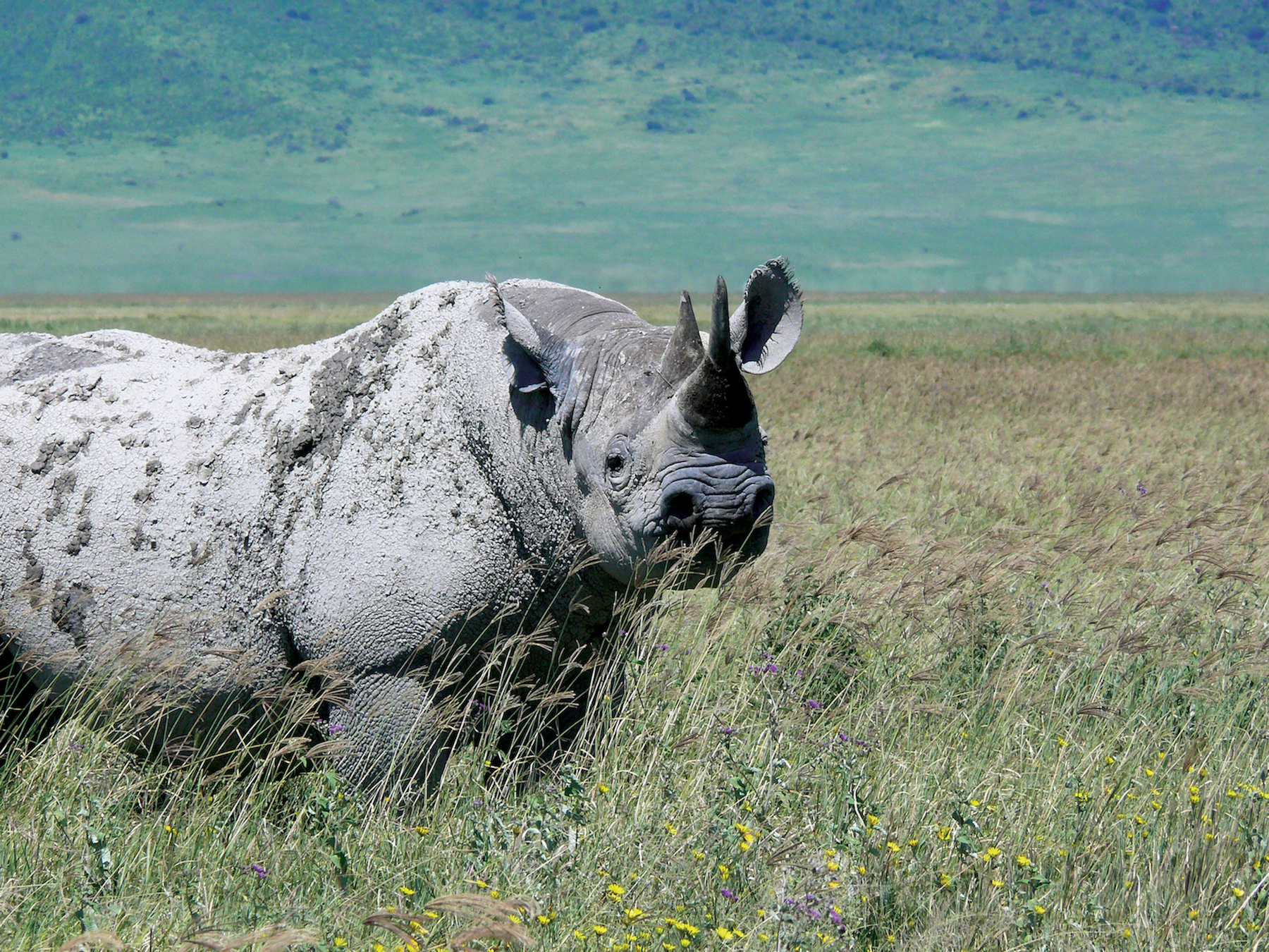 Rhino: one of the prized Big Five animals