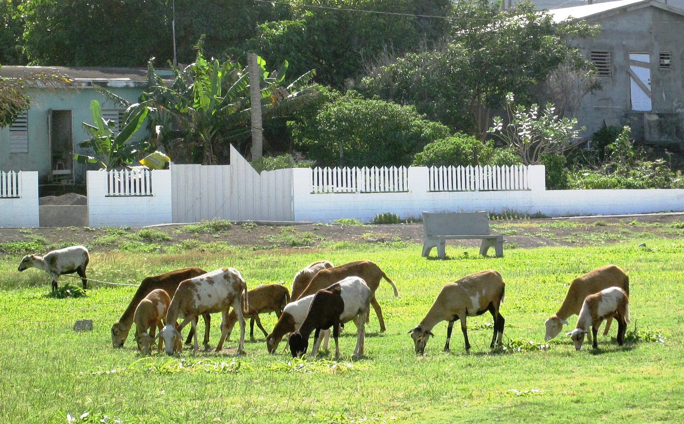 Herd of wild sheep
