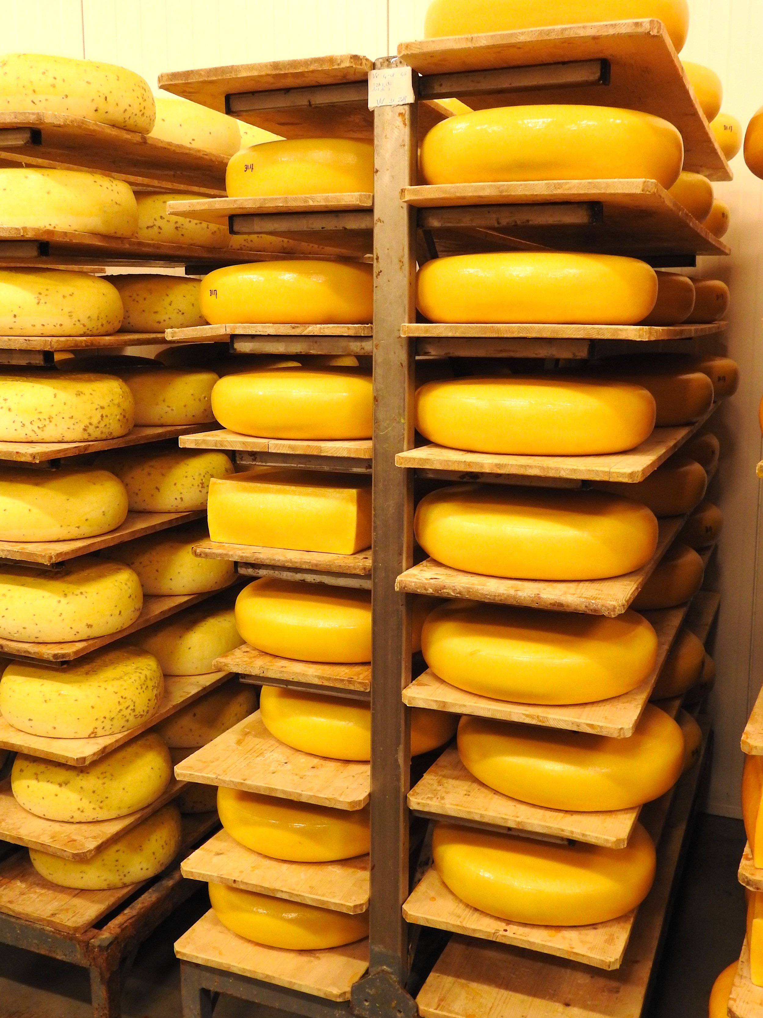 Gouda drying on wooden shelves for 2-3 weeks.