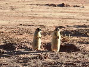 These prairie dogs came out to enjoy the sun's rays.