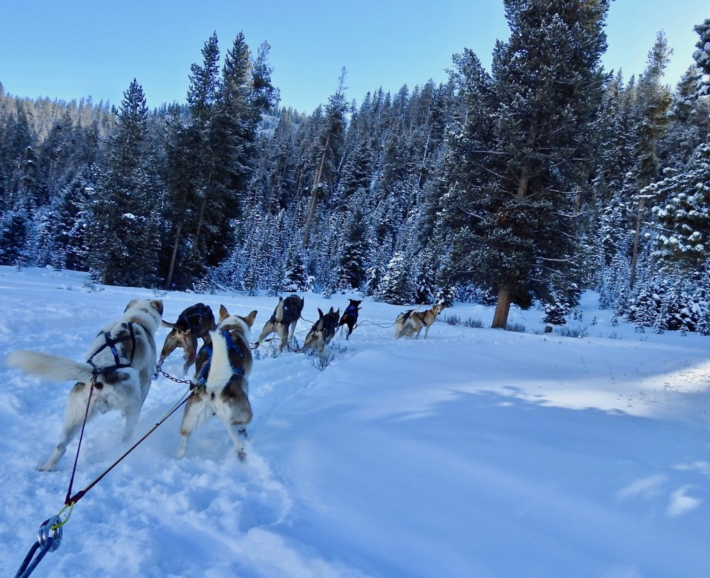 Our 8 dog team pulling us through the beautiful, snow covered terrain.