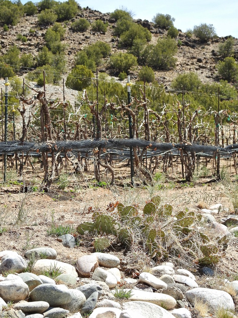 Rocks, vines and mountains of the Velarde Valley.