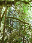 """Moss covers the trees giving the area a """"spooky"""" feel."""